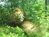 Safariparken