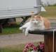 Våran katt hittade oxå en fin plats att ligga på :-)
