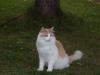 Våran katt fann sig tillrätta vi detta träd :-)