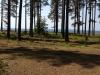 Stora campingtomter i fin tallskog