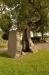 Runsten och ihåligt träd framför kyrkan. Tror trädet är en ask