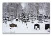 Järnkors med snö 1