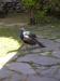 Påfågeln vaktade entrén till kyrkan