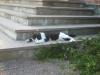 På kyrktrappan låg en trevlig katt