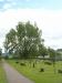 Den enorma björken på Dalby kyrkogård