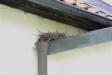 På baksidan har fåglarna hittat en plats att bygga bo på.