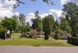 Blommande rhododendron gör kyrkogården till en oas