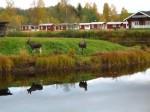 Bild från Klarälven Camping